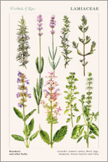 Wall sticker  Rosemary and other herbs - Elizabeth Rice