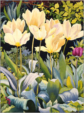 Gallery print  Pale tulips - Christopher Ryland