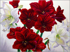 Gallery print  Red and white Amaryllis, 2008 - Christopher Ryland