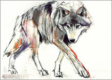 Gallery print  Wolf in search - Mark Adlington