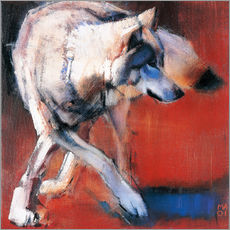 Gallery Print  Wolf - Mark Adlington