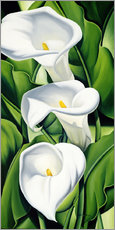 Gallery print  Lily - Catherine Abel