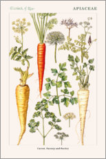 Wall sticker  Carrot, Parsnip and Parsley - Elizabeth Rice