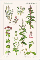 Gallery print  Thyme and other herbs - Elizabeth Rice