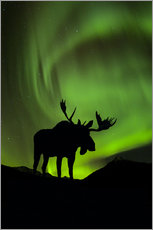Wall sticker  Moose silhouette with Aurora borealis - John Hyde