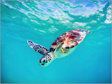 Gallery print  Green Turtle - M. Swiet