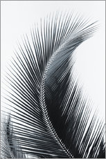 Wall sticker  Palm fronds - Larry Dale Gordon