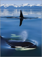 Wall sticker  Whales in front of the Range Mountains - John Hyde