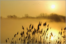 Gallery Print  Grasses at sunrise - Steeve Marcoux