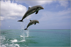 Wall sticker  Bottlenose dolphins jumping - Tom Soucek