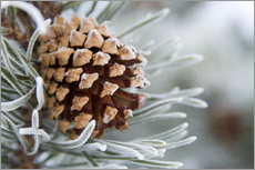 Wall sticker  Pine cone in the winter - Charles Tribbey