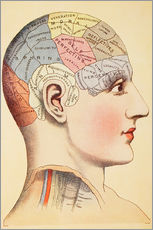 Gallery print  Map of the human brain - Wunderkammer Collection