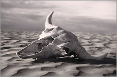 Gallery print  Skull in the desert - Carson Ganci