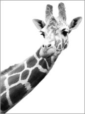 Wall sticker  Giraffe in black and white - Darren Greenwood