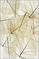 Wall Sticker  Layered Leaves - Kelly Redinger