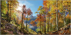 Gallery print  Mountain forest in autumn - Michael Rucker