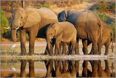 Wall Stickers  Elephants at a river, Africa wildlife - wiw