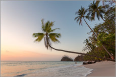 Wall sticker  Palm tree and exotic sandy beach at sunset, Costa Rica - Matteo Colombo