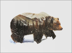 Wall sticker  Arctic grizzly bear - Andreas Lie