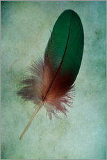 Wall Stickers  Green feather - Jaroslaw Blaminsky