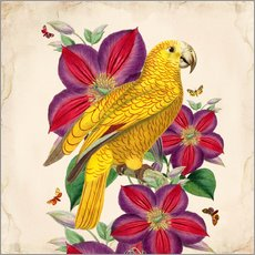 Wall sticker  Oh My Parrot V - Mandy Reinmuth