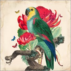Wall Stickers  Oh My Parrot X - Mandy Reinmuth