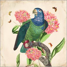 Wall sticker OhMyParrot IV