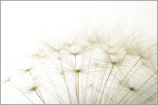 Wall sticker Fluffy dandelion