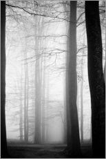 Gallery print  Trees in fog
