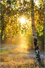 Gallery print  Birch trees in a summer forest