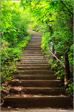 Gallery print  Stairway through the forest