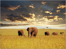 Gallery Print  Elephants in Africa