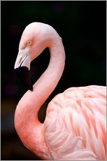 Gallery print  Pink Flamingo