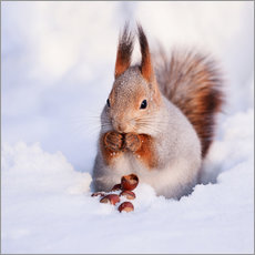 Wall sticker  Squirrel in the snow