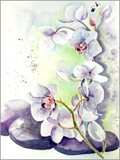 Gallery print  orchids - Maria Földy