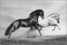 Gallery print  Horses black and white