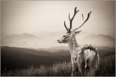 Wall sticker  Stag in the mountains