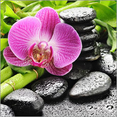 Zen stones and pink orchid