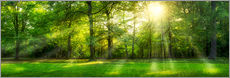 Gallery print  Forest panorama in summer - Jan Christopher Becke