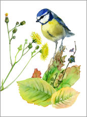 Gallery print  Blue Tit Bird and Sowthistle - Verbrugge Watercolor