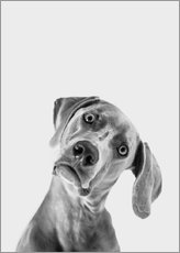 Wall Stickers  Questioning dog look - Finlay and Noa