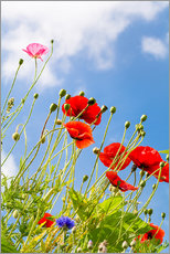 Wall sticker  Poppies into the sky - Edith Albuschat