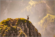 Gallery print  Capricorn in the Alps - Michael Helmer