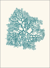 Wall sticker  Coral aqua - Patruschka
