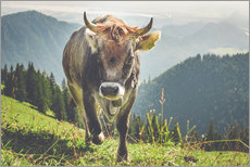 Gallery print  Cow in the mountains - Michael Helmer