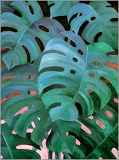 Wall Stickers  Monstera Love in Teal and Emerald Green - Micklyn Le Feuvre