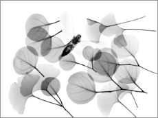Wall sticker  Ginkgo and bee