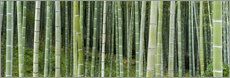 Wall sticker  Green bamboo forest in Kyoto, Japan - Jan Christopher Becke