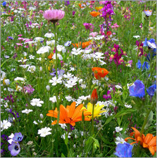 Gallery Print  Flowers Meadow - blackpool