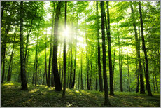 Gallery print  Sunlight in the green forest, spring time